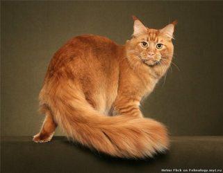 Warna-warna kucing adalah nama  Aturan dasar genetika kucing